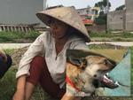 Hà Tĩnh: Bé 4 tuổi bị chó becgie nhà nuôi cắn đa chấn thương vùng mặt, rách da đầu-2