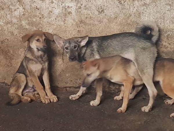 Hòa Bình: Cả nhà bị chó dại cắn, 2 bố con tử vong-1