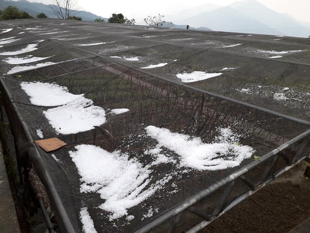 30 phút mưa đá, trắng xóa nhiều làng bản ở Nghệ An-5
