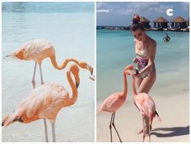 Khám phá đảo hồng hạc đẹp nhất vùng biển Caribbean