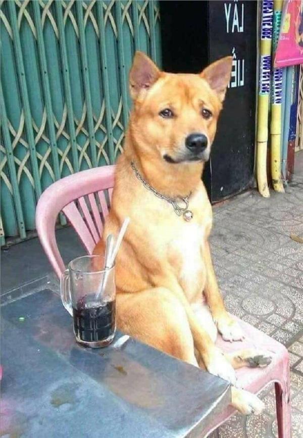 Chú chó rơi nước mắt khi được chủ thắp nến tổ chức sinh nhật khiến ai nấy đều rưng rưng-2