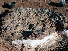 Kinh hoàng 'nghĩa địa khủng long' khổng lồ thời tiền sử ở Nam Mỹ