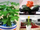 3 con giáp phải trồng cây này mới PHÁT TÀI PHÁT LỘC, tài khoản nảy số chóng mặt, giàu sang sáng chói