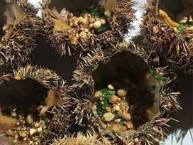 6 món đặc sản Lý Sơn mang hương vị gây thương nhớ của biển