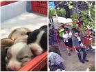 Khách du lịch 'cầm nhầm' chó Corgi của quán cà phê ở Đà Lạt