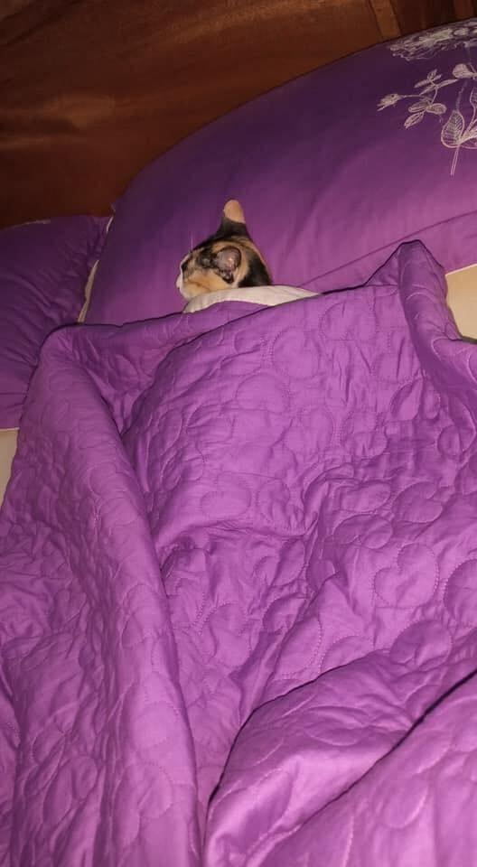 Vợ bất lực nhìn chồng ngủ với kẻ thứ ba nhưng khi bồ nhí lộ diện thì ai cũng phì cười-2