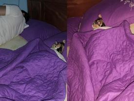 Vợ bất lực nhìn chồng ngủ với 'kẻ thứ ba' nhưng khi bồ nhí lộ diện thì ai cũng phì cười