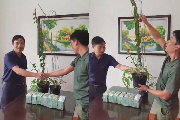 Tiết lộ của đại gia Hà Tĩnh ra Hải Phòng mua 2 chậu lan 3,5 tỷ-2