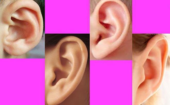 Xem tướng tai của phụ nữ nhìn thấu vận mệnh cả đời: Hưởng no nê tài lộc hay dính hoạ thị phi?-2