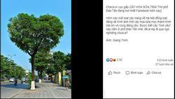 Bức ảnh chụp cây hoa sữa hình trái tim trên một con phố ở Hà Nội khiến dân tình tự hỏi: Có phải photoshop?