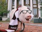 Lợn con du lịch từ Mỹ đến Bắc Cực, chưa có ý định trở về nhà