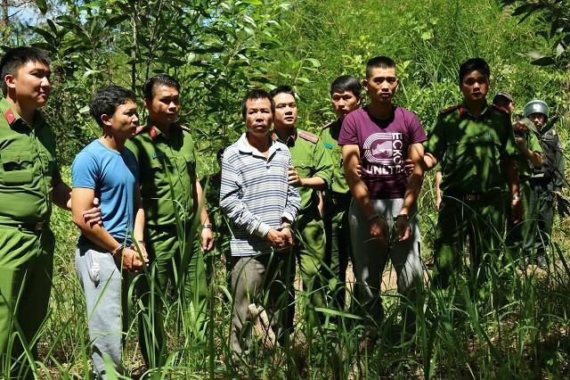 Bắt kẻ cầm đầu vụ hạ độc hơn 10 ha rừng thông 20 năm tuổi-1