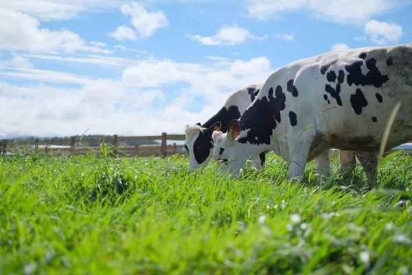Vì sao sữa tươi Vinamilk dẫn đầu thị trường trong nước?-4