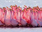 Thiên đường chim hồng hạc ở đầm lầy muối Curacao