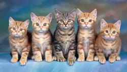6 con vật nên nuôi trong nhà để đuổi hết vận đen, đón lộc về nhà, gia chủ phất lên như diều gặp gió