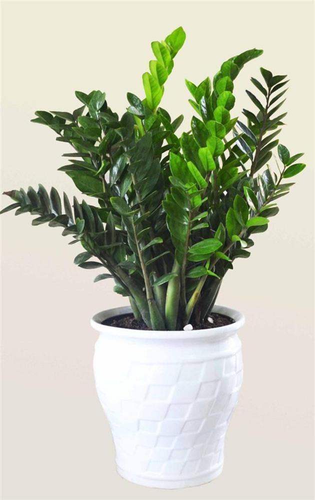 12 con giáp cứ trồng cây phong thủy này để hút vận may, gia tăng lộc khí, gọi lộc về nhà-1