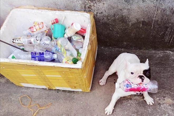Chú chó ở Hà Nội đam mê gom nhặt chai, lọ cũ-1