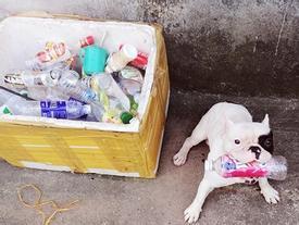 Chú chó ở Hà Nội 'đam mê' gom nhặt chai, lọ cũ