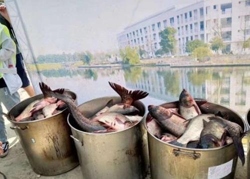 Trường nhà người ta, đánh 750kg cá trong hồ làm tiệc mừng sinh viên tốt nghiệp-2