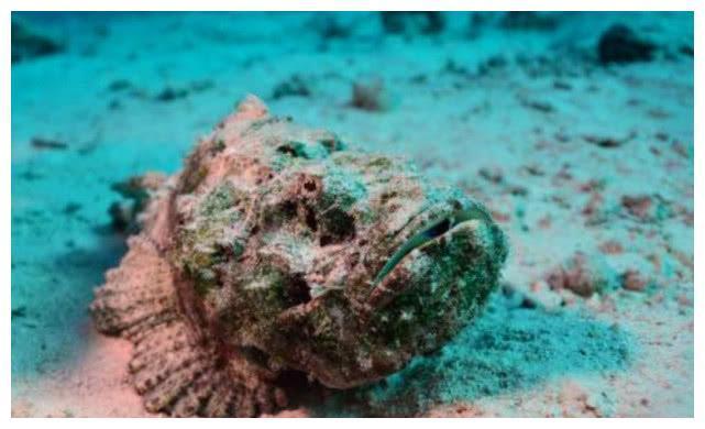 Loài cá cực độc được các đầu bếp Trung Quốc chế biến thành món cực phẩm-1