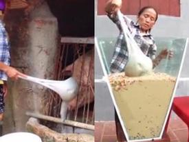 Cộng đồng mạng tranh cãi kịch liệt trước nghi án Bà Tân Vlog dùng cùng 1 chiếc vá để cho heo ăn và… khuấy trà sữa