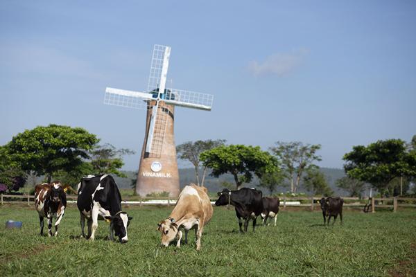 Vinamilk thuyết trình về xu hướng Ogranic tại hội nghị sữa toàn cầu-7