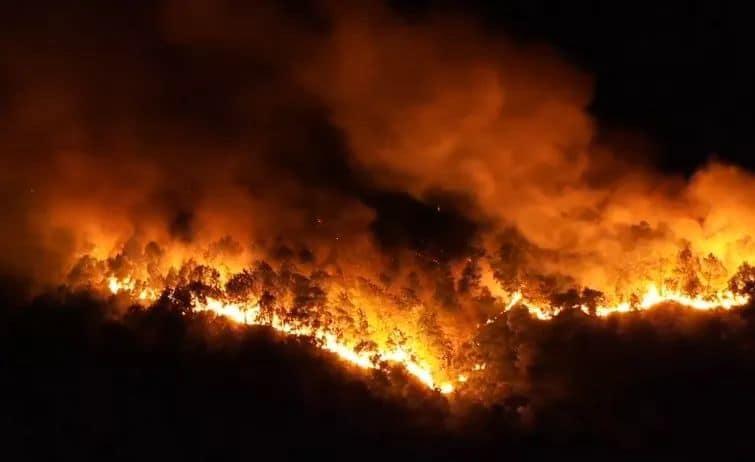 Clip: Cháy rừng chưa từng có ở Hà Tĩnh, nguy cơ ngắt đôi điện Bắc - Trung - Nam-2