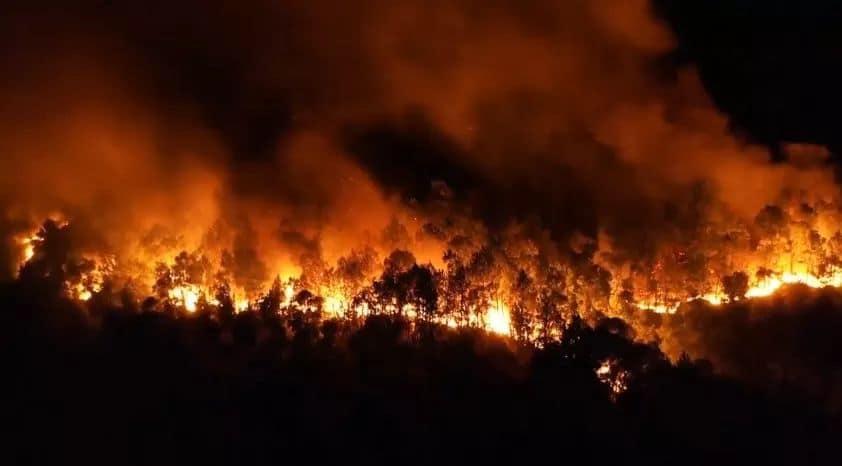 Clip: Cháy rừng chưa từng có ở Hà Tĩnh, nguy cơ ngắt đôi điện Bắc - Trung - Nam-4