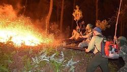 Cháy rừng thông, hơn 1000 người dập lửa : Bất ngờ tạm giữ một nghi can