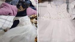 Nhận váy hộ vợ, chồng tưởng cho chó cưng mặc và cái kết ngoài sức tưởng tượng
