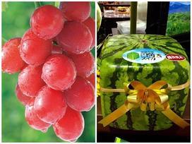 Top trái cây đắt đỏ nhất thế giới, loại đứng đầu có giá bằng 1 chiếc ô tô