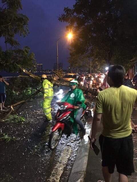 Hà Nội: Cây xanh ngã đổ giữa đường, đè trúng hai người phụ nữ đi xe máy-1