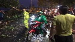 Hà Nội: Cây xanh ngã đổ giữa đường, đè trúng hai người phụ nữ đi xe máy