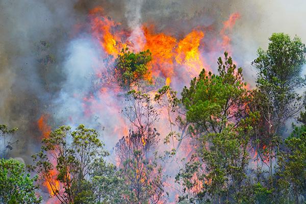 Rừng ở Đà Nẵng bốc cháy dữ dội, hơn 100 người tham gia dập lửa-1