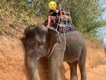 Chú voi gục đầu khi chở khách và nỗi ám ảnh động vật bị đem ra mua vui