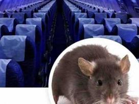 Chuyến bay Sài Gòn đi Thanh Hóa hỗn loạn vì khách đem theo chuột