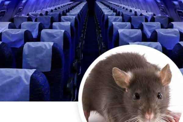 Chuyến bay Sài Gòn đi Thanh Hóa hỗn loạn vì khách đem theo chuột-1