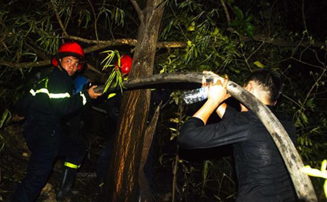 Cháy rừng ở Quy Nhơn, hàng trăm người tháo chạy-2