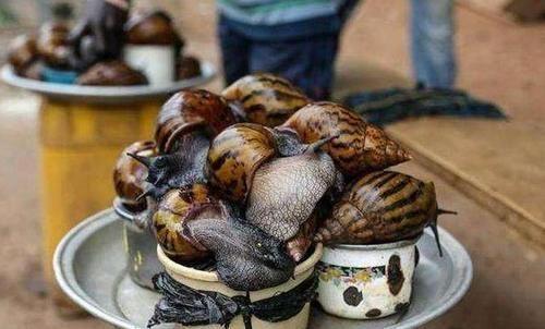 Loài vật này khiến mọi quốc gia kinh hãi nhưng người châu Phi lại nghiện ăn-4