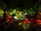 HOT: Hé lộ không gian tiệc cưới đẹp xuất sắc như khu rừng nhiệt đới của Cường Đô La - Đàm Thu Trang
