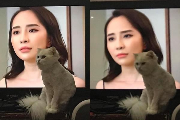 Chết cười chú mèo trong Về Nhà Đi Con: Thấy ông Sơn thì vuốt ve nhưng với tiểu tam Nhã lại không thể tưởng tượng nổi-3