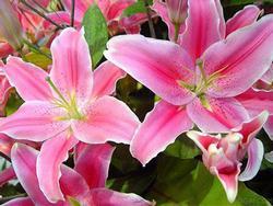 5 loại hoa chớ để lên bàn thờ tháng 7 kẻo đắc tội thần linh, càng làm càng lụi