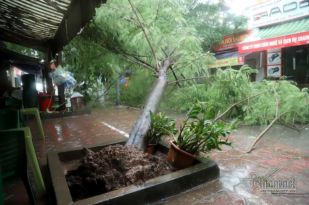 Hà Nội mưa tầm tã, gió phần phật, hàng chục cây xanh gãy đổ-2