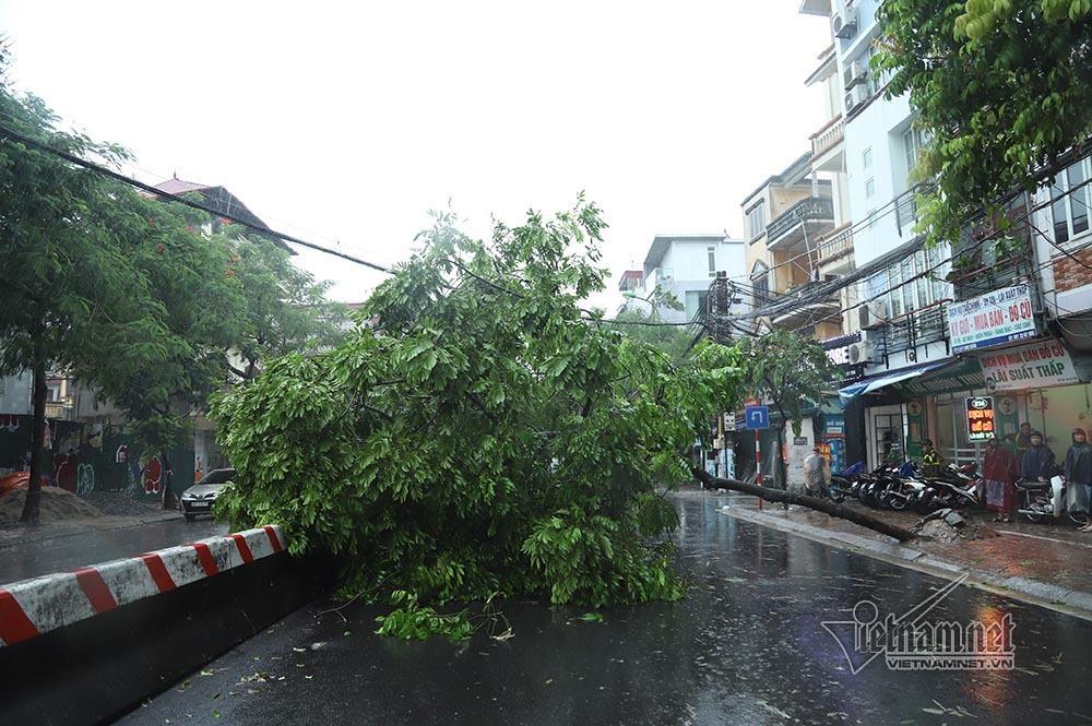 Hà Nội mưa tầm tã, gió phần phật, hàng chục cây xanh gãy đổ-3
