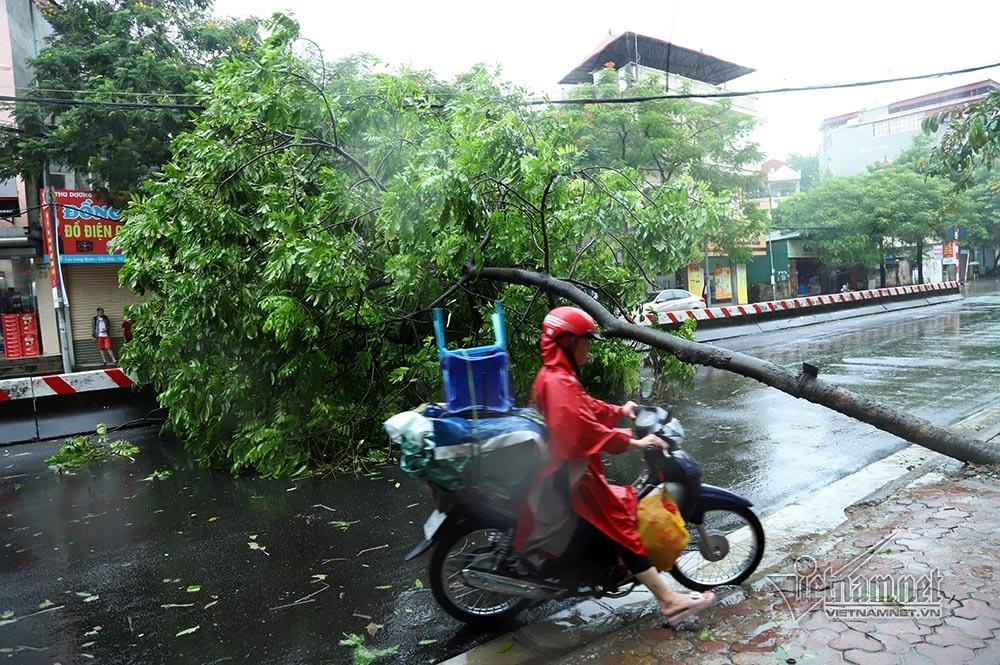 Hà Nội mưa tầm tã, gió phần phật, hàng chục cây xanh gãy đổ-4