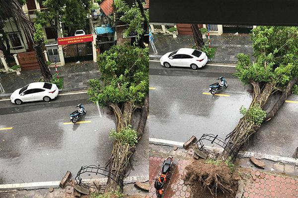 Hà Nội mưa tầm tã, gió phần phật, hàng chục cây xanh gãy đổ-6
