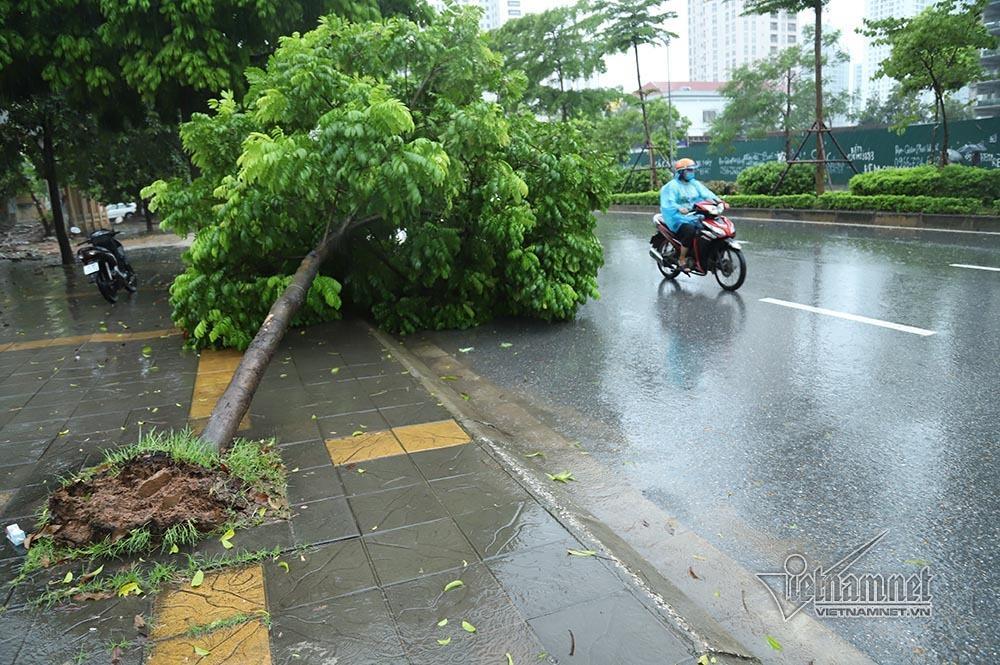 Hà Nội mưa tầm tã, gió phần phật, hàng chục cây xanh gãy đổ-8