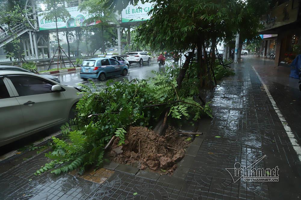 Hà Nội mưa tầm tã, gió phần phật, hàng chục cây xanh gãy đổ-10