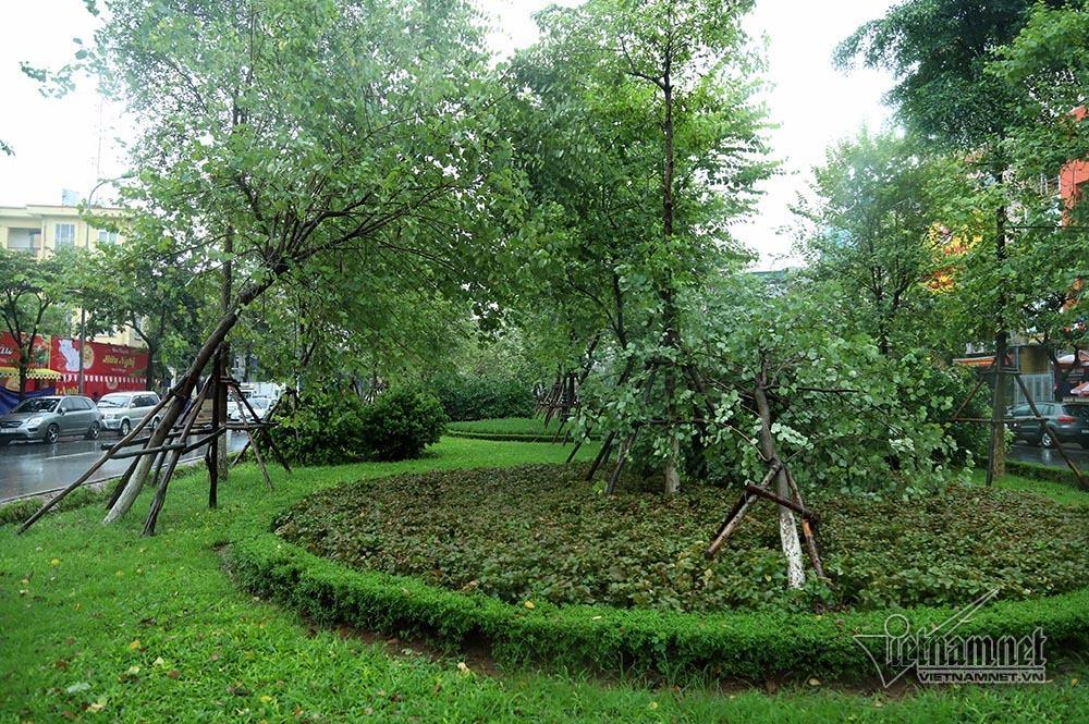 Hà Nội mưa tầm tã, gió phần phật, hàng chục cây xanh gãy đổ-12