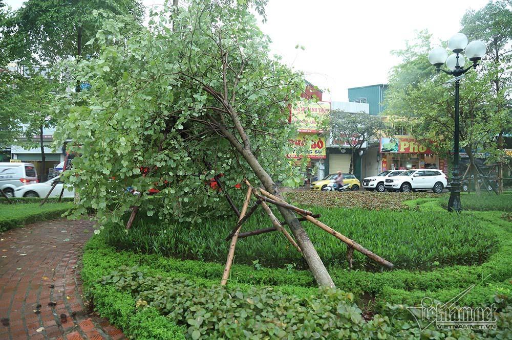 Hà Nội mưa tầm tã, gió phần phật, hàng chục cây xanh gãy đổ-13